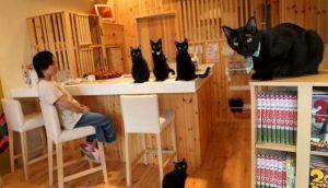 Cat Café Nekobayaka